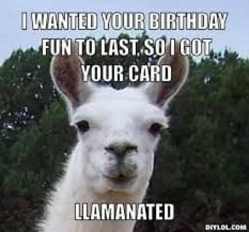 llama birthday graphic - i wanted your birthday fun to las so i got your card llamanated - llama pun