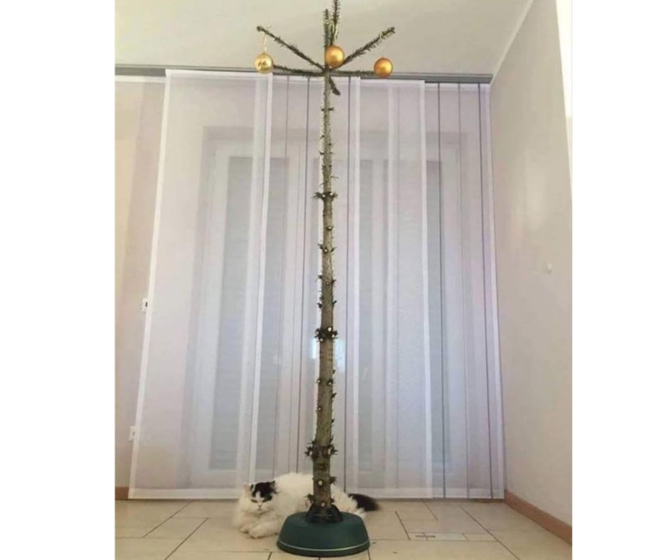 christmas tree for cats