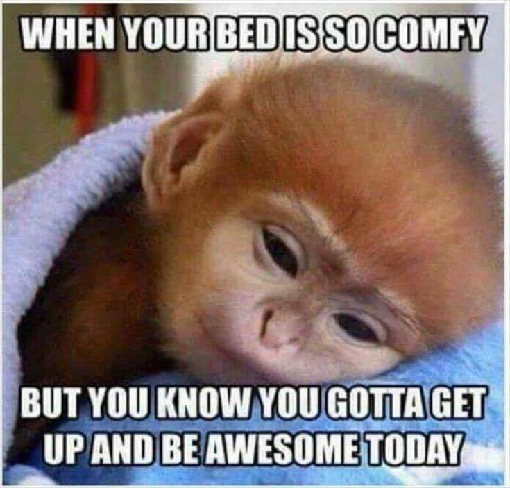 comfy bed meme