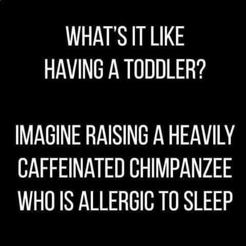 What It's Like to Have a ToddlerIt's an adventure having a toddler, that's for sure!