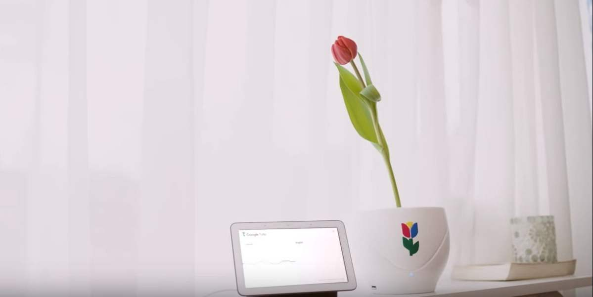 Google Tulip, Now You Can Talk To Your Plant In Your Language