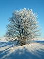 Immagine dell'albero. Inverno