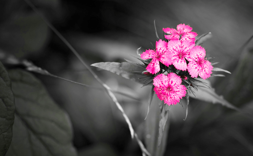 Quick selective color using Photoshop without lasso