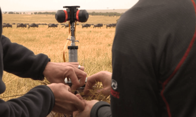 Local company films world's first narrated VR wildlife documentary