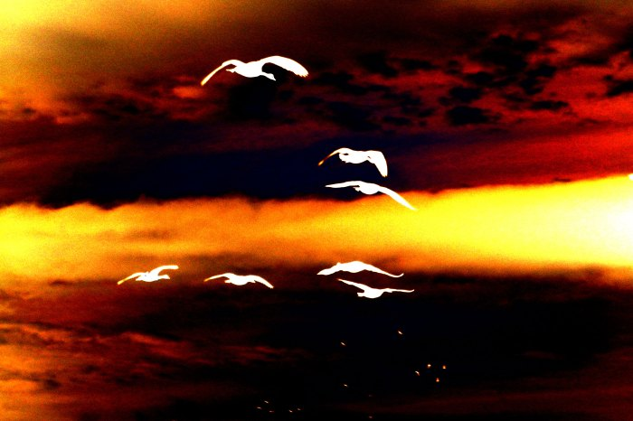 Flying-geese_curves2