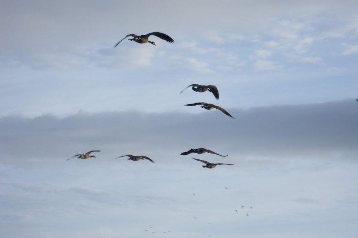 Flying-geese_original