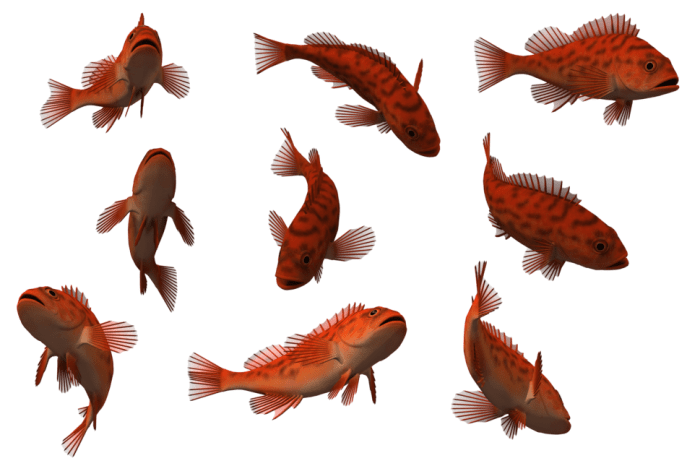 Fish_set_24_by_free_stock_by_wayne-d6arrnk