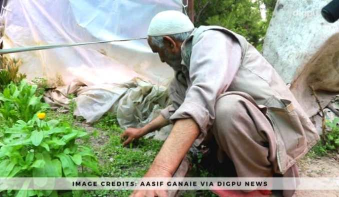 Floriculturist Ali Mohd Bhat – An Inspiration For Unemployed Youth In J&K - Digpu News Network