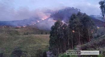 Gunung Pusuk Buhit Terbakar, Pendakian Ditutup untuk Wisatawan