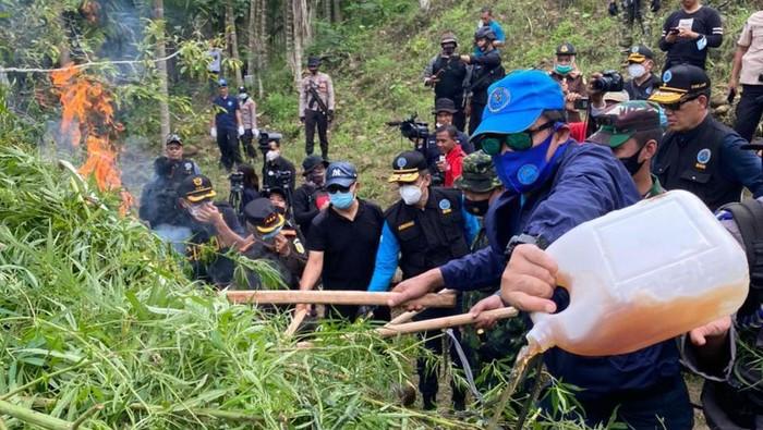 25 Ton Ganja dari Lahan Seluas 9 Hektar di Lhokseumawe Dimusnahkan