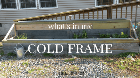 what's in my spring cold frame