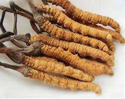 Chinese Caterpillar Fungus