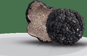 2013, beau cru pour la truffe