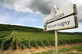 Vendanges: Mâcon-Lugny signe le top départ