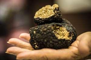 Les nouvelles ambitions de la truffe de Bourgogne