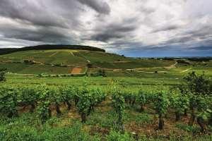 Climats Unesco: une histoire de Beaune à Bonn