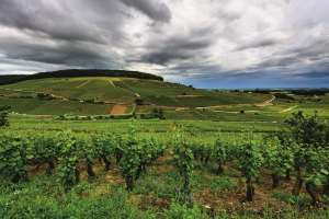 L'association des Climats ouvre l'Europe des vignes à tous