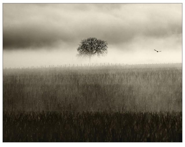 """""""Solitude"""", par Michel Joly"""