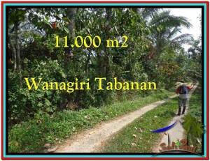 TANAH di TABANAN DIJUAL Untuk INVESTASI TJTB213