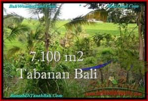 TANAH di TABANAN BALI DIJUAL MURAH 71 Are View sawah dan Kebun