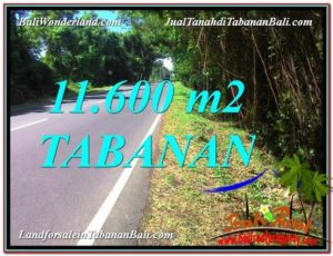 TANAH di TABANAN JUAL MURAH 11,600 m2  View laut dan Lingkungan Villa