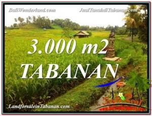 TANAH di TABANAN DIJUAL MURAH 3,000 m2 di Tabanan Selemadeg