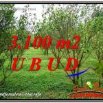 INVESTASI PROPERTY, TANAH di UBUD DIJUAL MURAH TJUB593