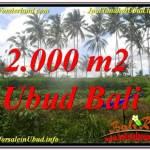 DIJUAL TANAH di UBUD 2,000 m2 di Ubud Pejeng
