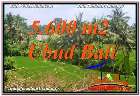 TANAH DIJUAL MURAH di UBUD BALI 5,600 m2 di Sentral / Ubud Center