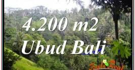JUAL TANAH MURAH di UBUD 4,200 m2 di Sentral / Ubud Center