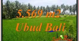 TANAH di UBUD BALI DIJUAL MURAH 56 Are View Sawah dan Sungai Kecil