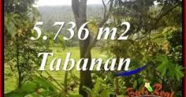 TANAH MURAH JUAL di TABANAN BALI 5,736 m2 View Kebun dan Sungai kecil