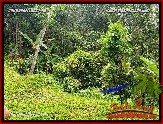 Tanah Murah di Ubud Bali Dijual TJUB691