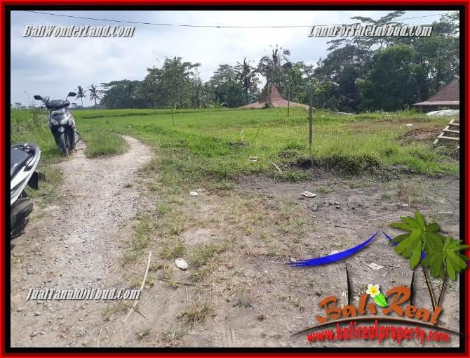 JUAL Tanah Murah di Ubud Bali 12 Are View sawah, lingkungan Villa