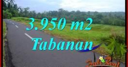 JUAL Tanah di Tabanan Bali 39.5 Are View Gunung dan Sawah