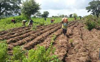 FARMERS IN THE JAMAN NORTH DISTRICT