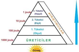 Besin zinciri enerji akışı piramidi