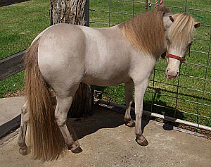 Image result for champagne horses