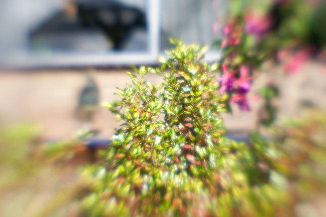 Lensbaby Composer Lens Tests