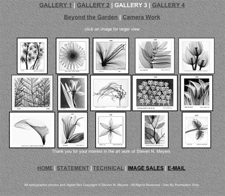 x-ray photography art