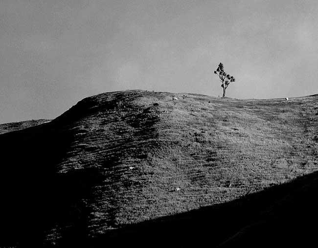 Rick Bulger photography