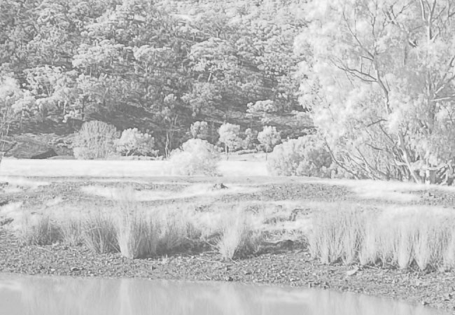 Canon 400D Infrared Photography Camera Test