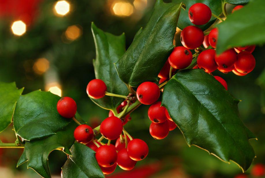 Risultati immagini per vischio natalizio
