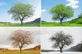 Growth And Development In Relationship- Different Seasons In Life
