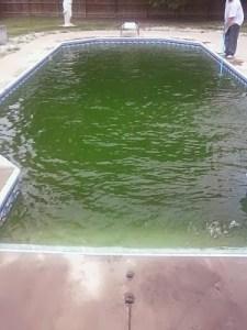 6 Penyebab Air Kolam Renang Berwarna Hijau