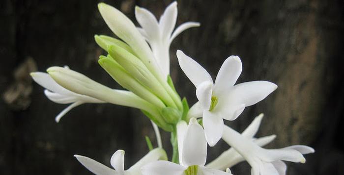 benefits of flowers
