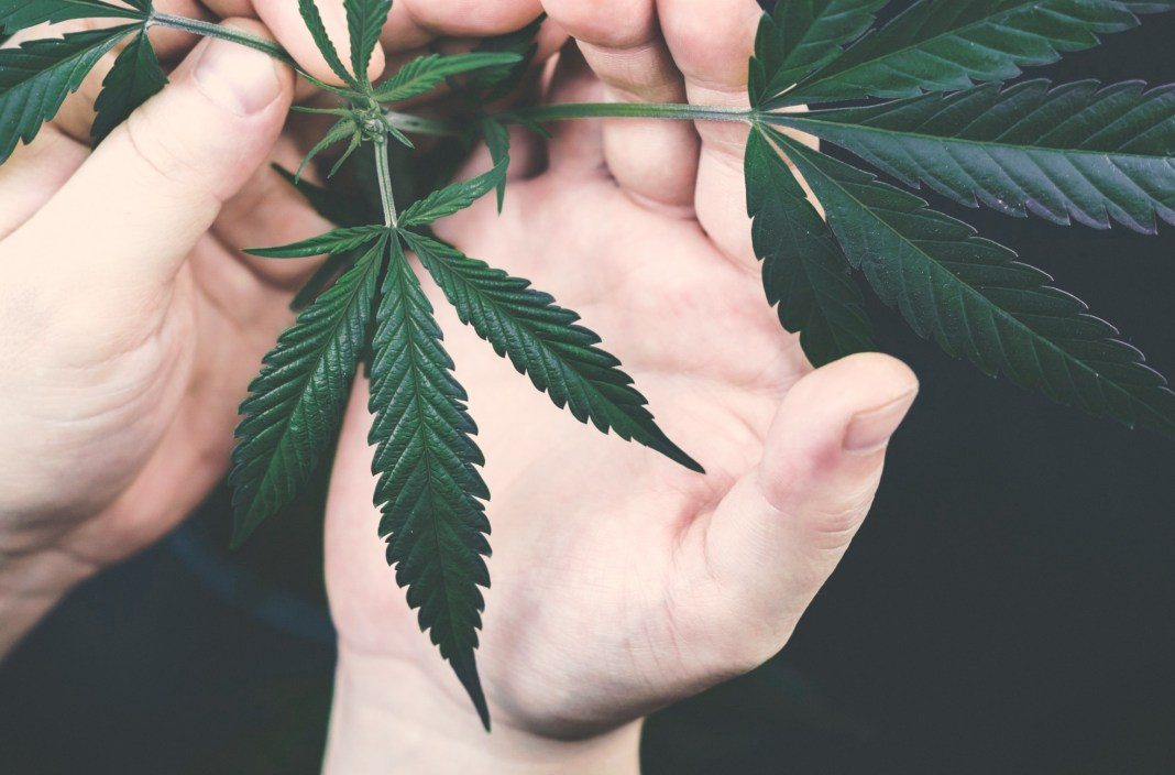 Common Mistakes New Cannabis Growers Must Watch Out