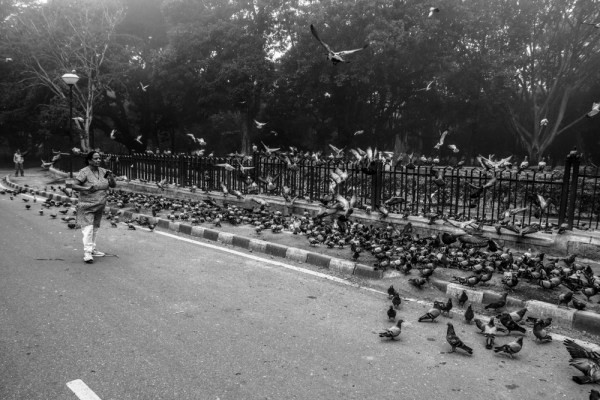 Everyone gets attracted to birds!