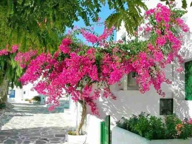 Η «μικρή κυρία» των Κυκλάδων: Το νησάκι των 300 κατοίκων με την σπάνια ομορφιά που λάτρεψε και ύμνησε ο Ελύτης