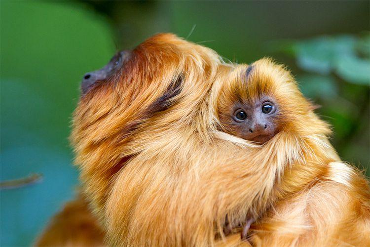 Apenheul – maak kennis met 35 soorten apen (2 p.)